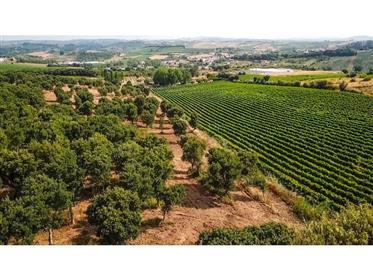 Ferme de luxe avec vignoble près de Lisbonne