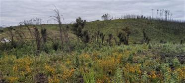 Terreno de 2,75 ha