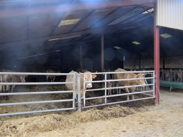 Agricultural property with 3 houses on 58ha of land, outbuildings...