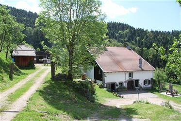 Vivenda: 395 m²