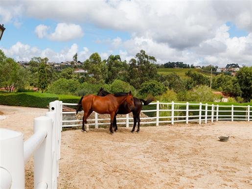 Herdade e Centro de Equitação em Mafra