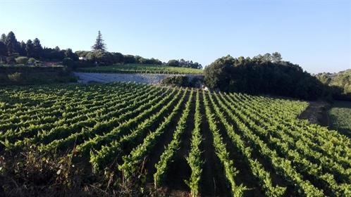 Quinta de Excelência de produção de vinho verde e turismo n~