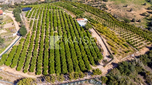 Large plot of orange grove and a small house, 10 min away fr
