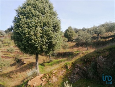 Douro Valley  Rustic land with 9.800m2, 2 Km from the village of Mazouco, 500m from the D