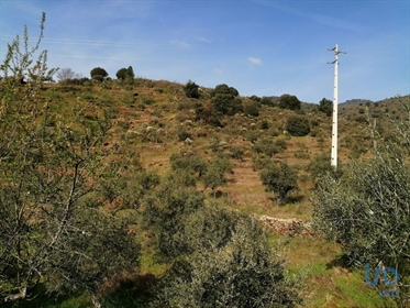 Douro Valley  Rustic land with 800m2 near the village of Mazouco, with views to the Douro