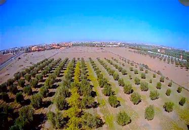 Land 3 hectares Marrakech villa zone Gh2 Real estate developer