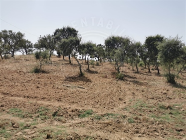 18,185 Ha Melides with Sea View