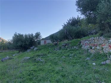 Οικόπεδο 4.116 τ.μ., Ελειός-Προνώνη