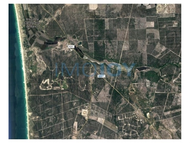 Land with 20 Ha with building permit approved in the Comporta Zone (Muda)
