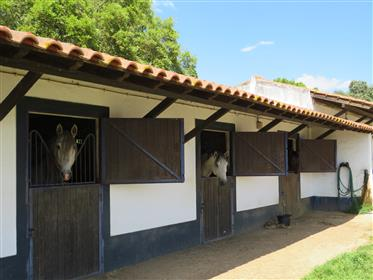 Classic Alentejo property with Stables, main residence and 46 hectares of land – Montemor – Alentejo