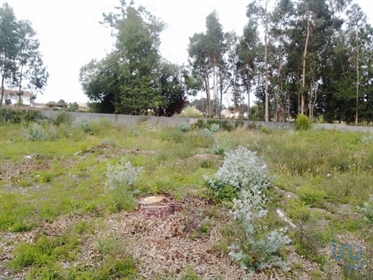 Excellent land in the town of Alvarães, region of Viana do Castelo. This fully buildable 6