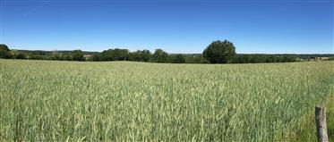 A Sale Haute-Vienne (87) Near A Large Farming City Sheep - Crops And Lactating Cows On 117Ha