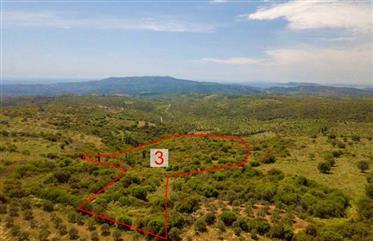 Plot 36,169 m2 with panoramic views At Agnanti Area Chranon-Petalidi