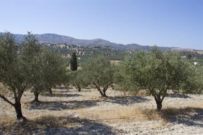 (Προς Πώληση) Αξιοποιήσιμη Γη Οικόπεδο εκτός σχεδίου    Ν. Ηρακλείου/Τυμπάκι - 4.700 τ.μ, 90.000€