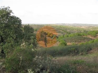 Terreno Rústico Com 4.960 M2 - Com Árvores - Dois Acesso - Azinhal - Castro Marim - Algarve