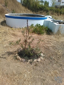 Land of 3,243m² with well and fruit trees.  Located next to the main road in the town of