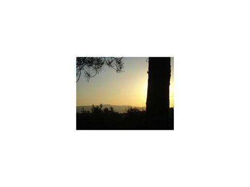 Propriedade, com 5,5 ha na região de Borba, para venda, em estado de natureza pura