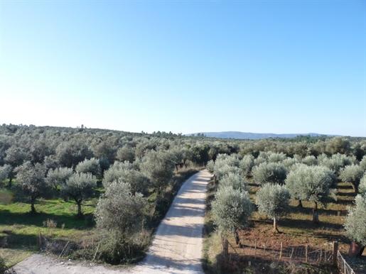 Propriedade com 4 ha na região de Borba para venda. Natureza em estado puro.
