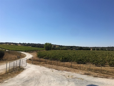 Estate in the Alentejo with 99 ha and vineyards