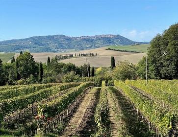 Azienda Agricola di 1030 m2 a Montalcino