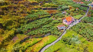 Oportunidade! - Propriedade Mista (Urbana - Rústica) - Ribeira Brava, Tábua, Madeira
