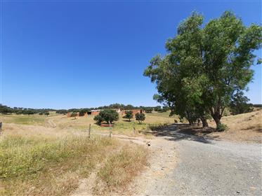 Homestead with 440 hectares, ideal for Tourism, with hunting, mounted and dams