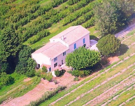 Alpilles - Provence