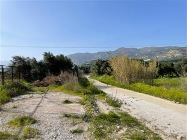 Plot of 998sq.m out f the village plan with olive trees on the provincial road Ierapetra - Kato Chor