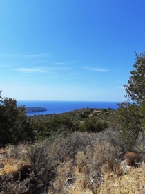 (For Sale) Land Agricultural Land    Lakonia/Oitylo - 7.853 Sq.m, 70.000€
