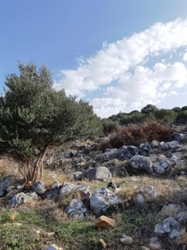 (For Sale) Land Agricultural Land    Lakonia/Oitylo - 6.714 Sq.m, 150.000€