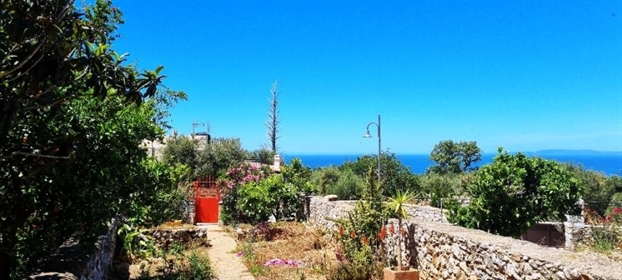 (For Sale) Residential Detached house || Lakonia/Oitylo - 19...