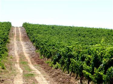 16 Ha de Vinha no Alentejo, Borba, Portugal.
