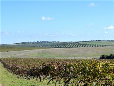 Farm In Portugal, Alentejo, Beja