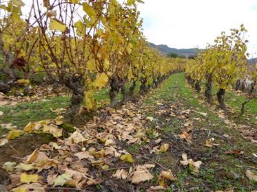 Port Wine farm and Doc wine. Portugal, Vila Real, Douro.