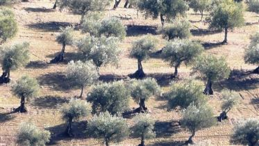 92 ha with Olival, Amendoal, Sobro and Forest. Portugal, Bra...