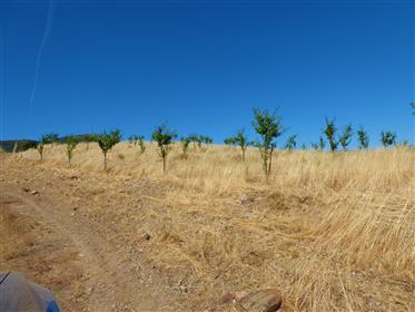 Terra, amendoeiras, sobreiros, cultura. Portugal, guarda, Pi...