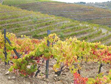 Wine Farm, 47 hectares of land. Portugal, Alto Douro, Torre ...