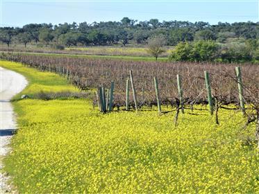 970.000 m² com Vinha, Adega, Cortiça. Portugal, Évora.