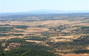 310 ha for Plantation, Cattle, Pasture. Portugal, Guard, Pin...