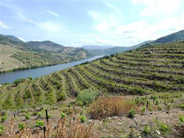 15.5Ha vinhedo em uma fazenda de 24Ha, com vista para o rio Douro. Portugal, Douro, V. N. F. Côa.