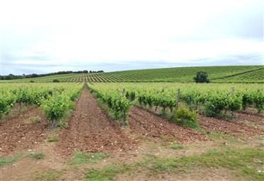 Vignoble de 161 000 m2 à Alentejo, Estremoz, Portugal.