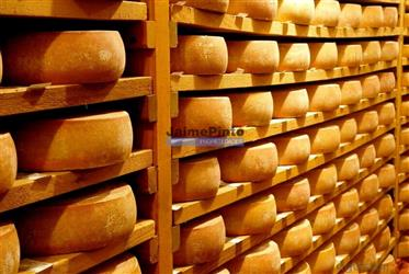 Cheese, industry, factory for sale. Portugal, North, Guarda.