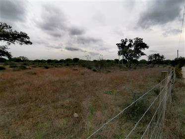 Country Estate In Alcochete