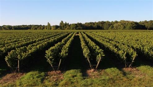 Château et son important domaine viticole à vendre dans le B...