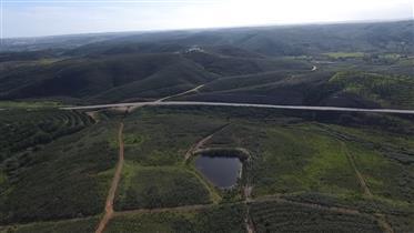 2 Lotes de terreno, 13 hectares, Desenvolvimento de turismo rural, Mexilhoeira Grande