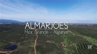 Fabuleux, terrains, 23 hectares, développement du tourisme, Mexilhoeira Grande