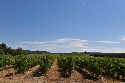 Wine estate of 321 ha including 105 ha of vines and 20 ha of cultivated fields, the remainder of the