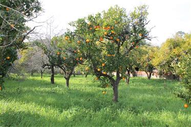 Quinta Baixo Mondego