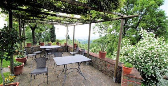 Farmhouse with pool and olive groves - Luxury properties in Tuscany Italy - Vesta Real Estate Agency