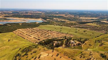 Rural Tourism with stables and vineyard in the Alentejo – Un...